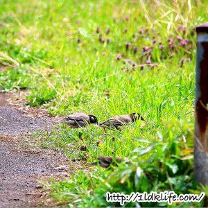 花見散歩_鳥のお昼ご飯